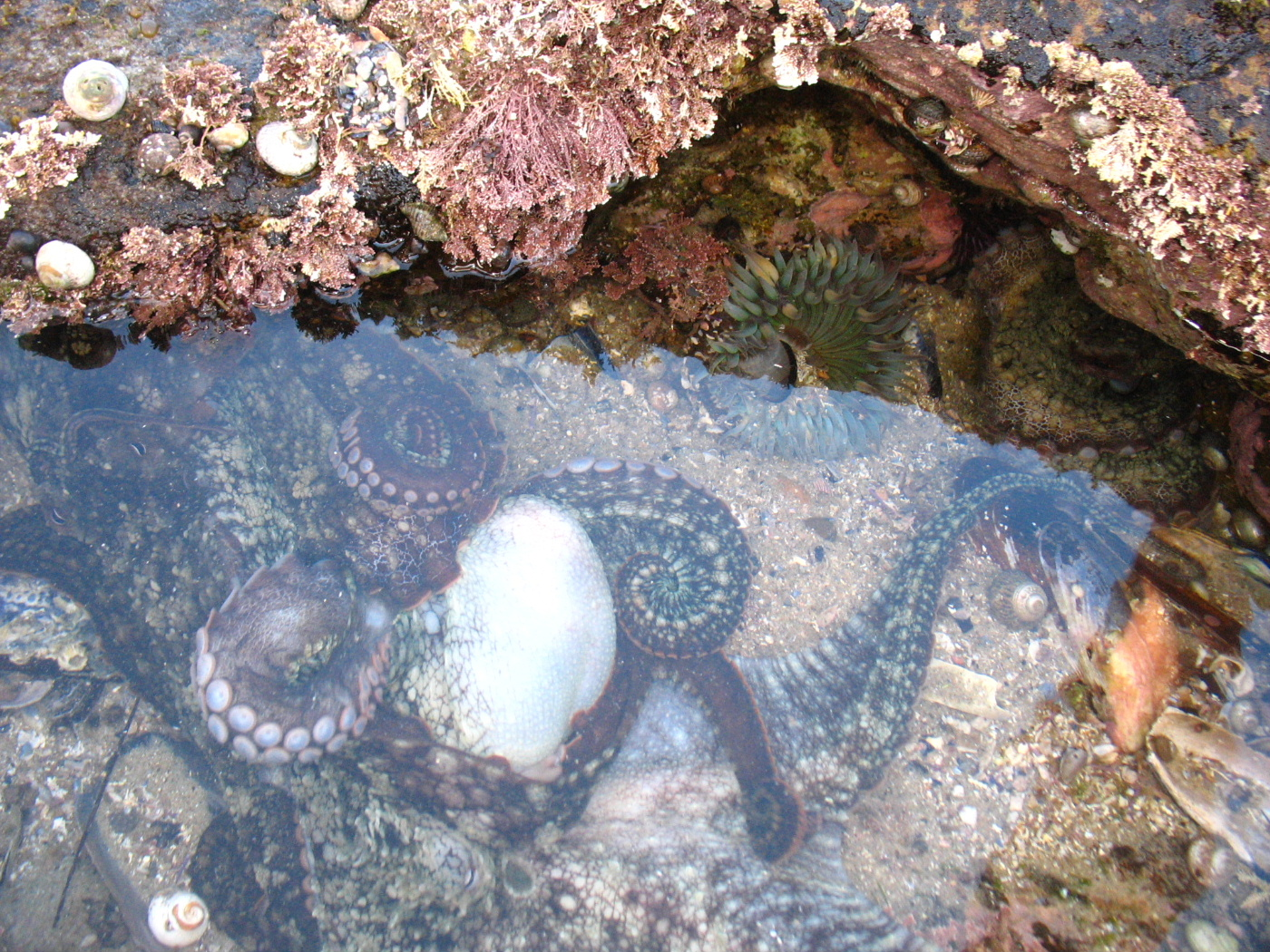 Tidepool Tales Laguna Bluebelt Working Together For A